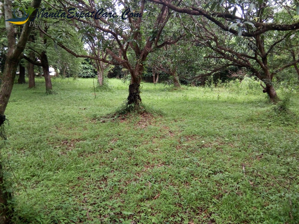 Antipolo property for sale with existing structures - buy Rizal Property, Antipolo lot for sale - Buy Land For Sale in Rizal, New and used Land and Farm