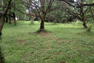 Antipolo Vacant Lot for Sale flat land in Philippines